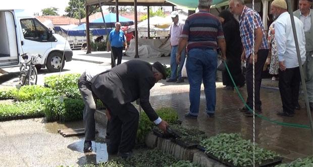 Organik sebze yetiştirme isteğine ilgi yoğun
