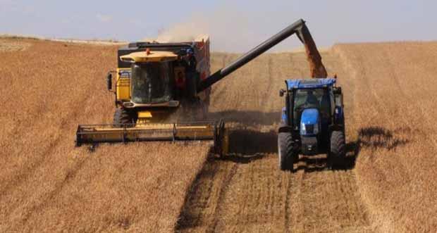 Buğday ve arpanın hasadına başlandı