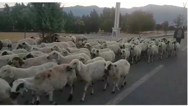 Hayvanlarını otlatmakta güçlük çekiyorlar
