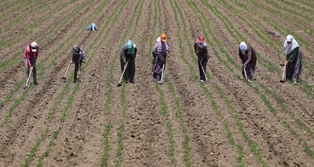 """""""Dünya Kadın Çiftçiler Günü Kutlu Olsun"""""""