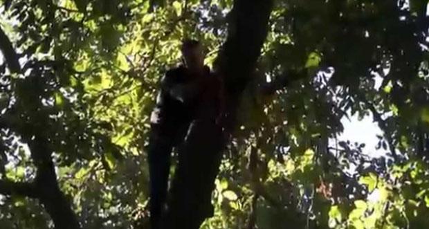 Erzincan'da ağaçtan düşen kişi hayatını kaybetti