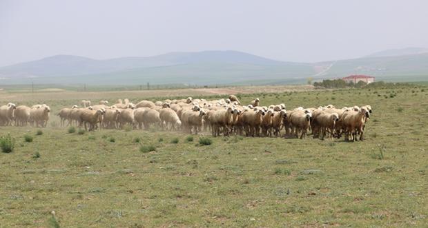 18 yaşındaki çoban ölü bulundu