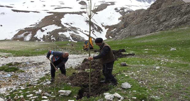 Bin adet fidan Munzur Dağlarında toprakla buluşturuldu