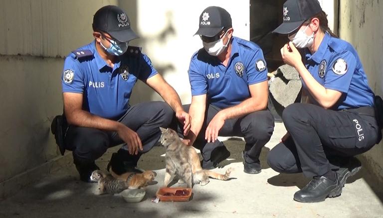 Yavru kedilerin bakımıyla ilgileniyorlar