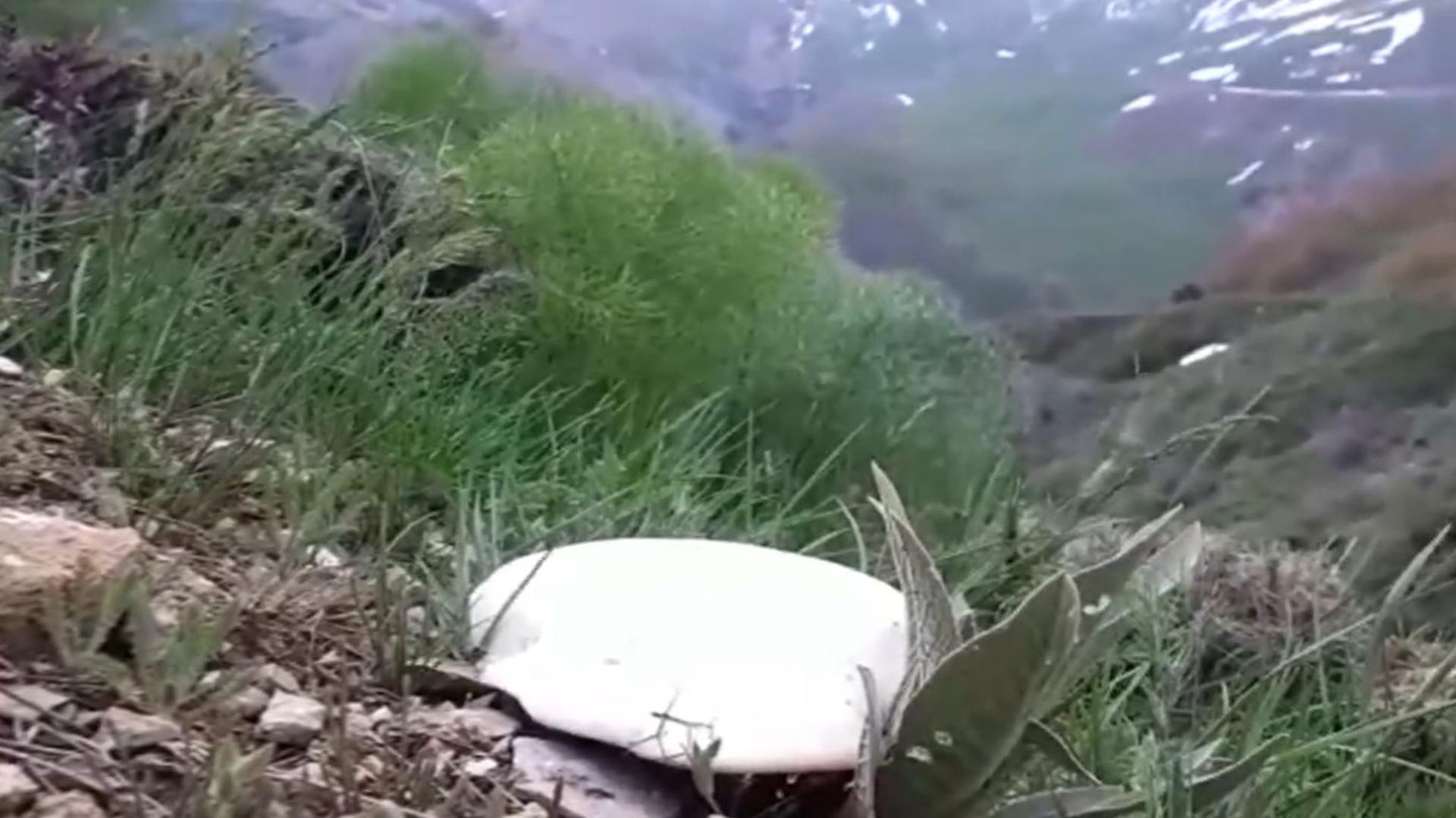 Yağan yağmurların ardından vatandaşlar mantar topluyor