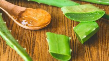 Aloe vera neye iyi geliyor? Aloe veranın faydaları nelerdir?