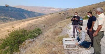 ELAZIĞ'DA KINALI KEKLİKLER DOĞASINA KAVUŞTU