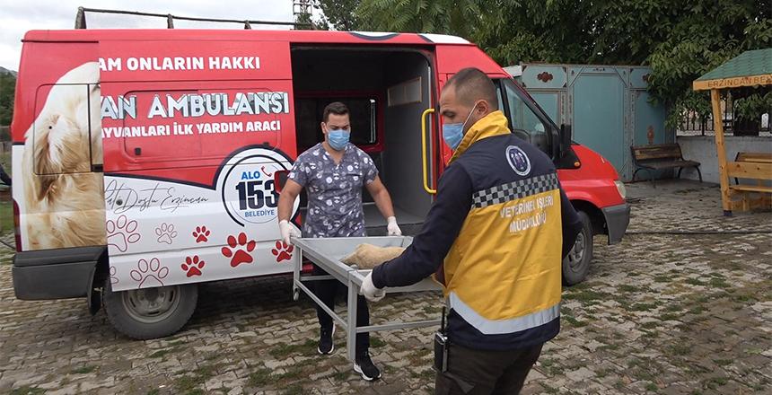 'HAYVAN AMBULANSI' HİZMETE BAŞLADI